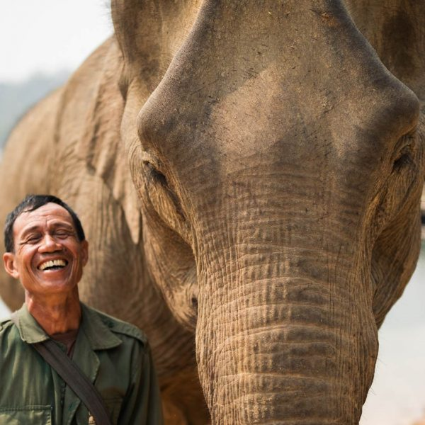 LAO-LEPHANT-AND-MAHOUT
