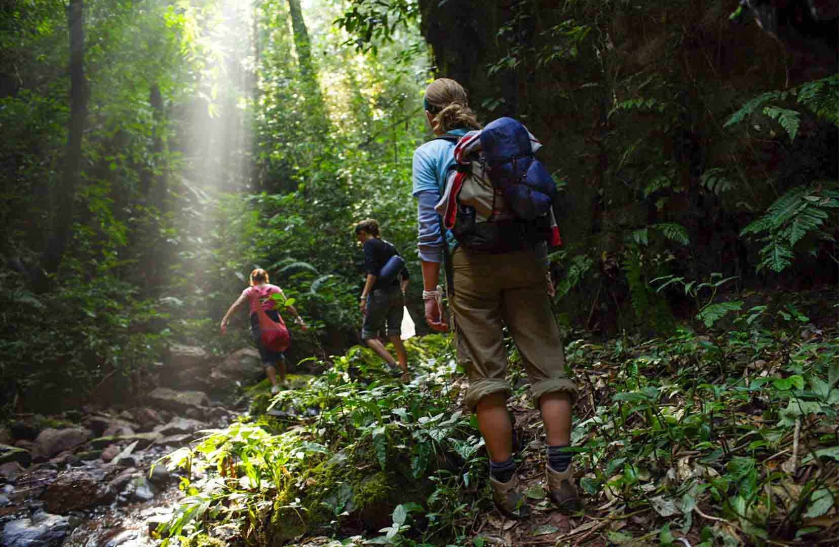 Luang Nam Tha jungle trekking