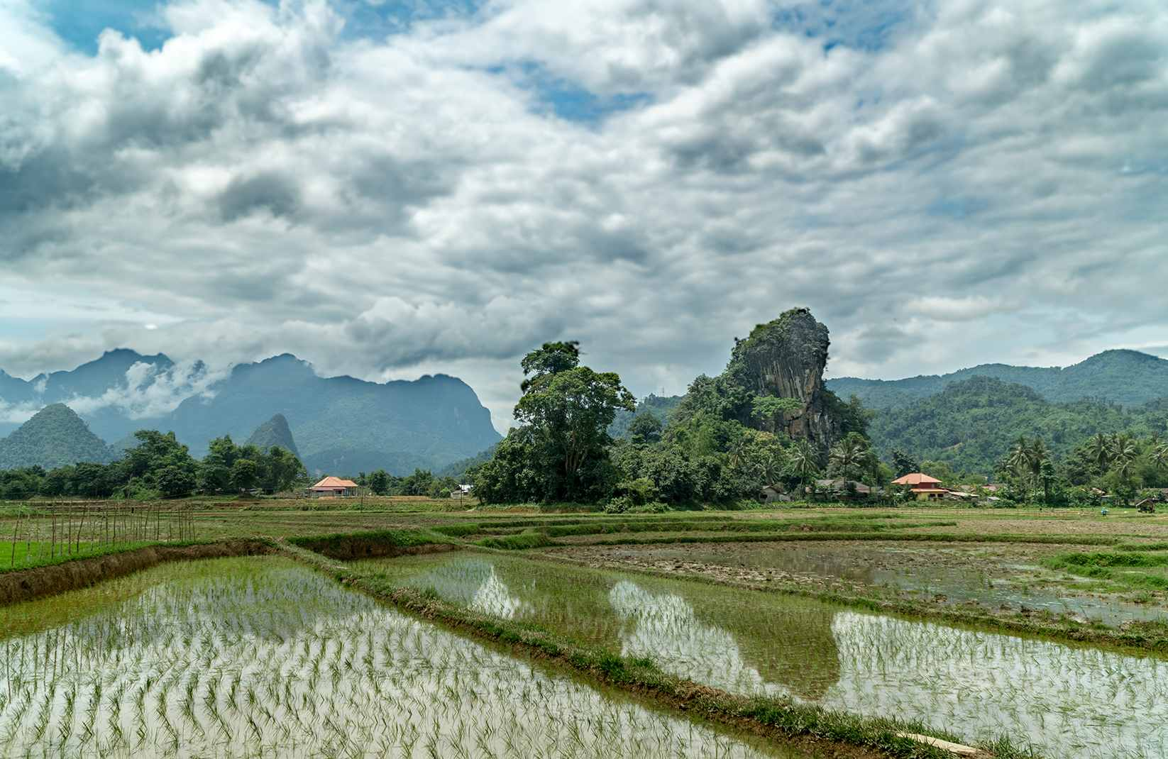 rice fields and clouds