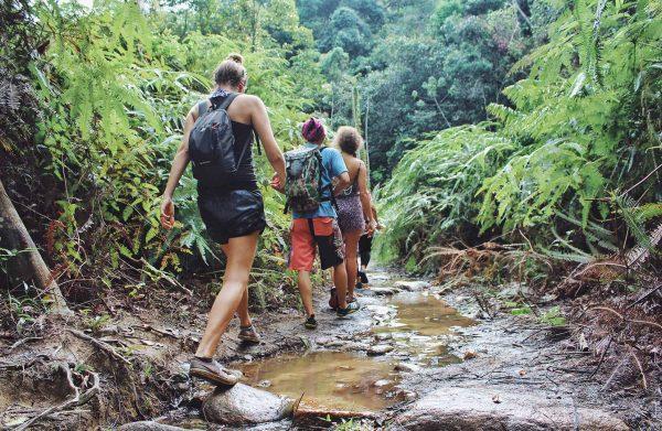 trekking through a jungle